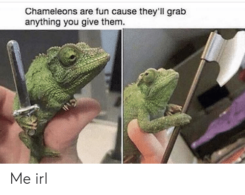 Irl, Me IRL, and Fun: Chameleons are fun cause they'll grab  anything you give them. Me irl