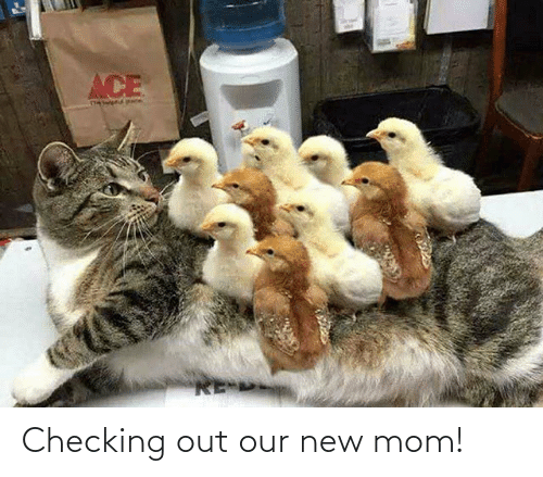 Mom: Checking out our new mom!