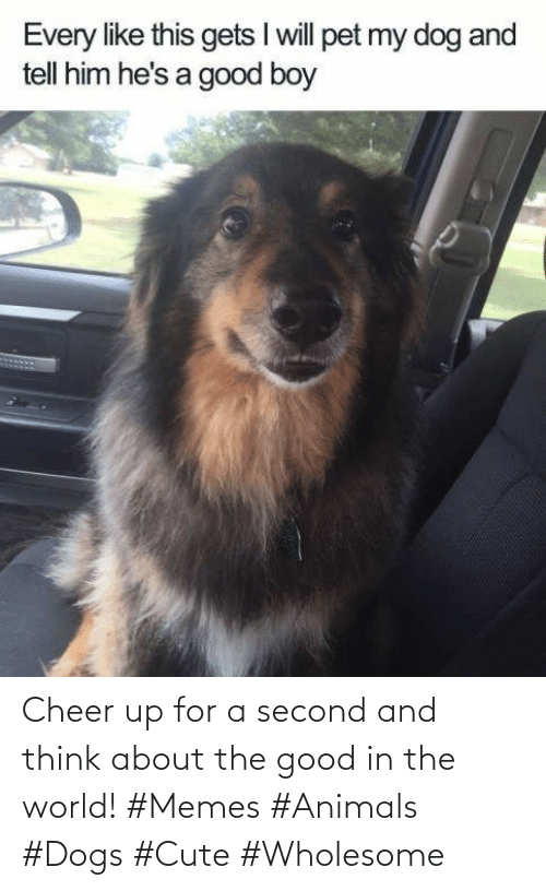 Second: Cheer up for a second and think about the good in the world! #Memes #Animals #Dogs #Cute #Wholesome