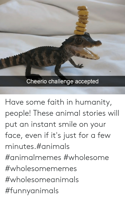 Animals, Animal, and Smile: Cheerio challenge accepted Have some faith in humanity, people! These animal stories will put an instant smile on your face, even if it's just for a few minutes.#animals #animalmemes #wholesome #wholesomememes #wholesomeanimals #funnyanimals