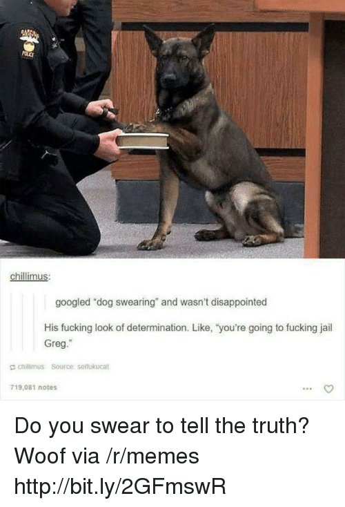 "Disappointed, Fucking, and Jail: chillimus  googled ""dog swearing"" and wasn't disappointed  His fucking look of determination. Like, ""you're going to fucking jail  Greg.""  E chillimus Source serfukucat  719,081 notes Do you swear to tell the truth? Woof via /r/memes http://bit.ly/2GFmswR"
