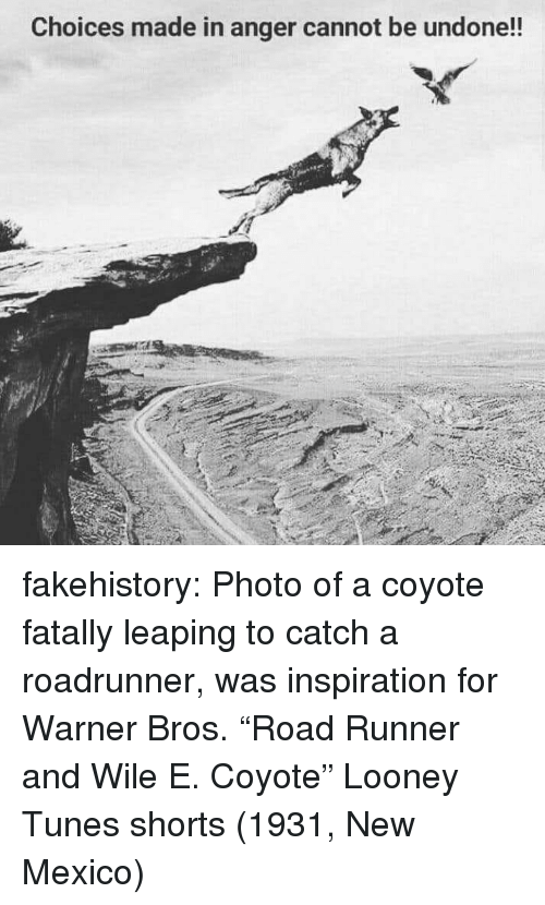 """Looney Tunes, Tumblr, and Warner Bros.: Choices made in anger cannot be undone!! fakehistory: Photo of a coyote fatally leaping to catch a roadrunner, was inspiration for Warner Bros. """"Road Runner and Wile E. Coyote"""" Looney Tunes shorts (1931, New Mexico)"""