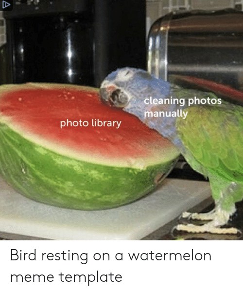 Watermelon Meme: cleaning photos  manually  photo library Bird resting on a watermelon meme template