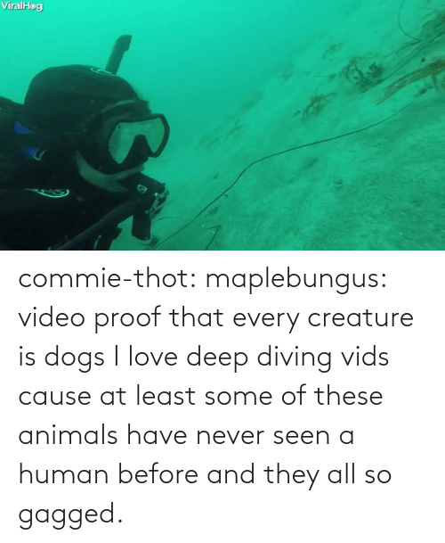 human: commie-thot:  maplebungus: video proof that every creature is dogs  I love deep diving vids cause at least some of these animals have never seen a human before and they all so gagged.