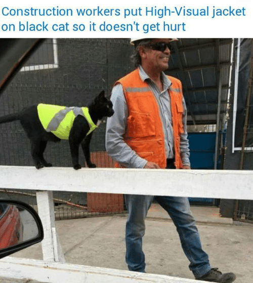 Black, Construction, and Cat: Construction workers put High-Visual jacket  on black cat so it doesn't get hurt