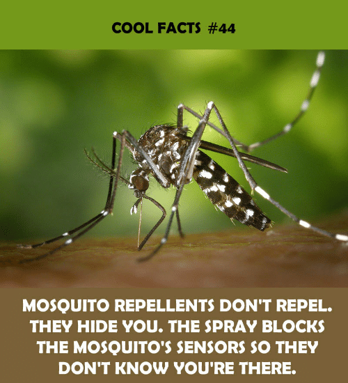 Know Youre: COOL FACTS #44  MOSQUITO REPELLENTS DON'T REPEL.  THEY HIDE YOU. THE SPRAY BLOCKS  THE MOSQUITO'S SENSORS SO THEY  DON'T KNOW YOU'RE THERE.