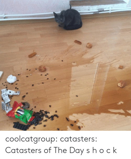 Tumblr, Blog, and Chat: coolcatgroup:  catasters:  Catasters of The Day  s h o c k