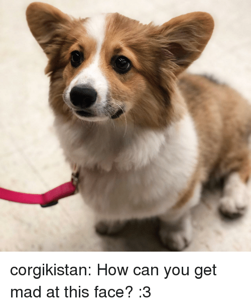 Tumblr, Blog, and Mad: corgikistan:  How can you get mad at this face? :3