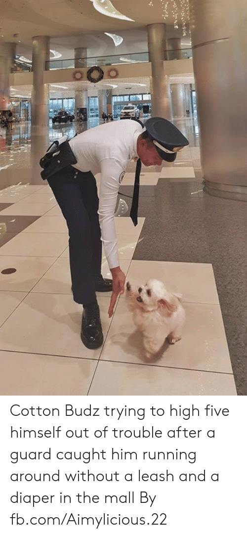 fb.com: Cotton Budz trying to high five himself out of trouble after a guard caught him running around without a leash and a diaper in the mall  By fb.com/Aimylicious.22
