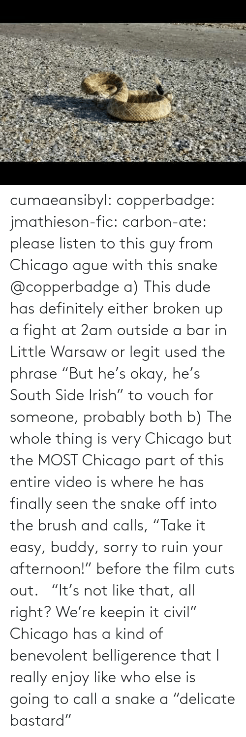 "Your: cumaeansibyl: copperbadge:  jmathieson-fic:  carbon-ate: please listen to this guy from Chicago ague with this snake @copperbadge  a) This dude has definitely either broken up a fight at 2am outside a bar in Little Warsaw or legit used the phrase ""But he's okay, he's South Side Irish"" to vouch for someone, probably both b) The whole thing is very Chicago but the MOST Chicago part of this entire video is where he has finally seen the snake off into the brush and calls, ""Take it easy, buddy, sorry to ruin your afternoon!"" before the film cuts out.    ""It's not like that, all right? We're keepin it civil"" Chicago has a kind of benevolent belligerence that I really enjoy like who else is going to call a snake a ""delicate bastard"""