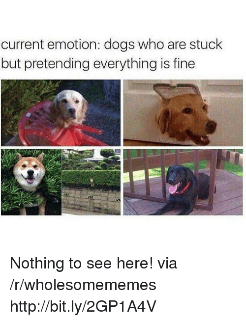 Dogs, Http, and Who: current emotion: dogs who are stuck  but pretending everything is fine Nothing to see here! via /r/wholesomememes http://bit.ly/2GP1A4V