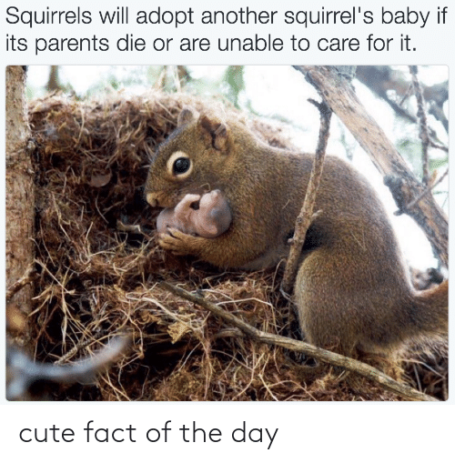 cute: cute fact of the day