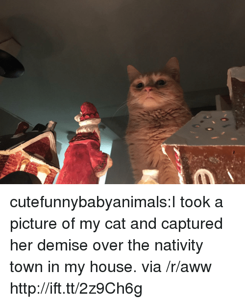 nativity: cutefunnybabyanimals:I took a picture of my cat and captured her demise over the nativity town in my house. via /r/aww http://ift.tt/2z9Ch6g