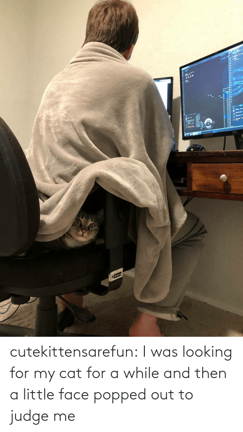 Looking For: cutekittensarefun: I was looking for my cat for a while and then a little face popped out to judge me