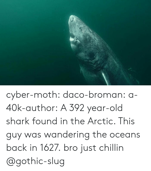Broman: cyber-moth:  daco-broman: a-40k-author:  A 392 year-old shark found in the Arctic. This guy was wandering the oceans back in 1627.  bro just chillin   @gothic-slug