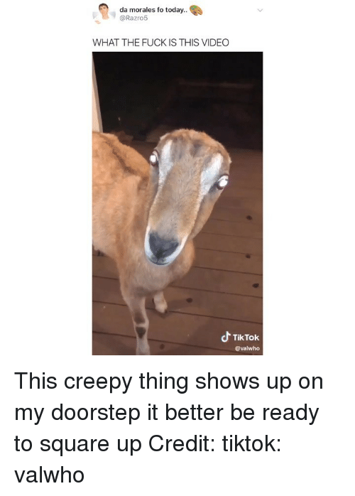 Creepy, Memes, and Square Up: da morales fo today..  @Razro5  WHAT THE FUCK IS THIS VIDEO  よTikTok  @valwho This creepy thing shows up on my doorstep it better be ready to square up Credit: tiktok: valwho