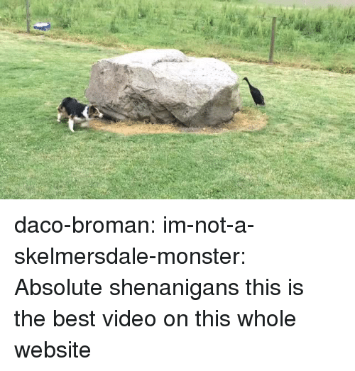 Broman: daco-broman: im-not-a-skelmersdale-monster:  Absolute shenanigans   this is the best video on this whole website