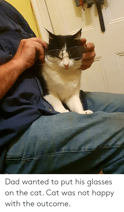 His Glasses: Dad wanted to put his glasses on the cat. Cat was not happy with the outcome.