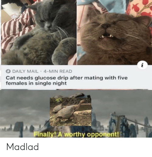 drip: DAILY MAIL- 4-MIN READ  Cat needs glucose drip after mating with five  females in single night  Finally! A worthy opponent! Madlad