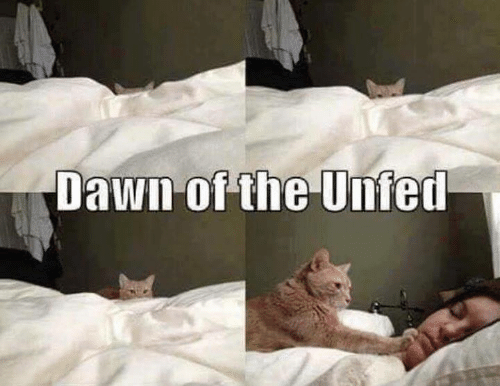 Memes, Dawn, and 🤖: Dawn of the Unfed