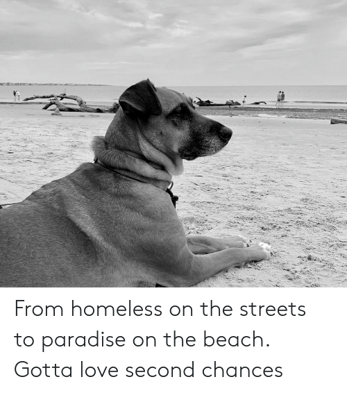 Homeless, Love, and Paradise: de From homeless on the streets to paradise on the beach. Gotta love second chances