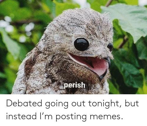 Going Out: Debated going out tonight, but instead I'm posting memes.