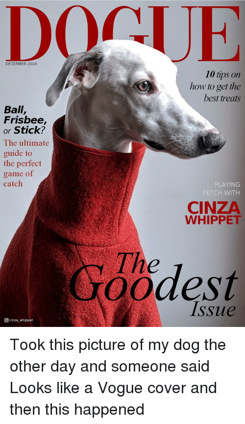 vogue: DECEMBER 2018  10 tips on  how to get the  best treats  Ball,  Frisbee,  or Stick?  The ultimate  guide to  the perfect  game of  catch  PLAYING  FETCH WITH  CINZA  WHIPPET  The  oodest  Issue  回cinza-whippet Took this picture of my dog the other day and someone said Looks like a Vogue cover and then this happened