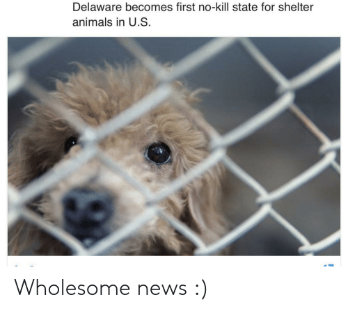 Animals, News, and Wholesome: Delaware becomes first no-kill state for shelter  animals in U.S Wholesome news :)
