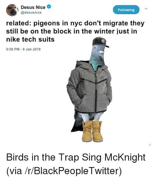 Blackpeopletwitter, Nike, and Trap: Desus Nice  @desusnice  Following  related: pigeons in nyc don't migrate they  still be on the block in the winter just in  nike tech suits  9:59 PM 9 Jan 2019 Birds in the Trap Sing McKnight (via /r/BlackPeopleTwitter)