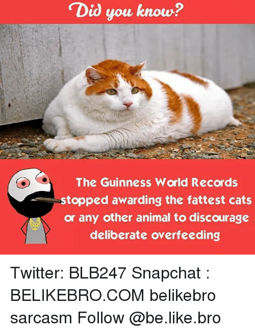 Memes, 🤖, and Guinness: Did you know?  The Guinness World Records  stopped awarding the fattest cats  or any other animal to discourage  deliberate overfeeding Twitter: BLB247 Snapchat : BELIKEBRO.COM belikebro sarcasm Follow @be.like.bro
