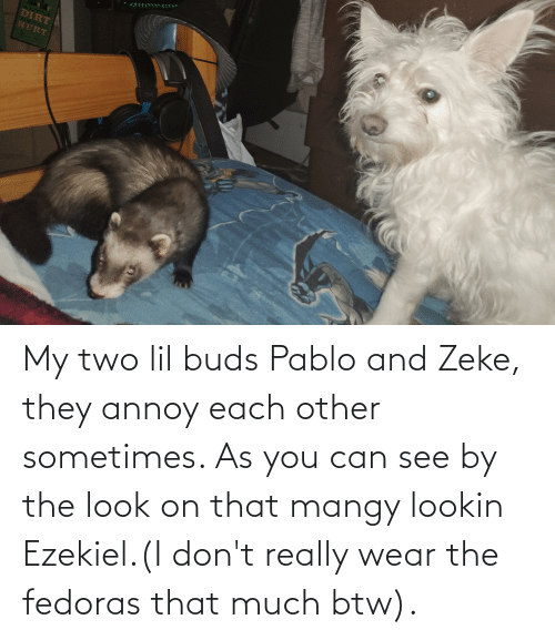 Can, Dirt, and Ezekiel: DIRT  HURT My two lil buds Pablo and Zeke, they annoy each other sometimes. As you can see by the look on that mangy lookin Ezekiel.(I don't really wear the fedoras that much btw).