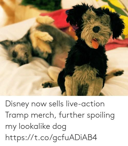 Disney, Memes, and Live: Disney now sells live-action Tramp merch, further spoiling my lookalike dog https://t.co/gcfuADiAB4