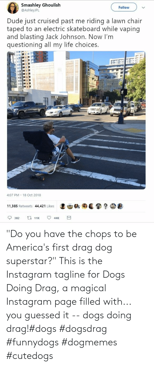 "do you: ""Do you have the chops to be America's first drag dog superstar?"" This is the Instagram tagline for Dogs Doing Drag, a magical Instagram page filled with... you guessed it -- dogs doing drag!#dogs #dogsdrag #funnydogs #dogmemes #cutedogs"