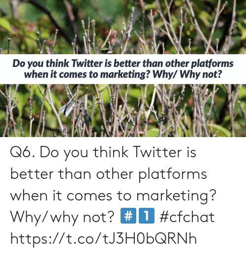 Memes, Twitter, and 🤖: Do you think Twitter is better than other platforms  when it comes to marketing? Why/ Why not? Q6. Do you think Twitter is better than other platforms when it comes to marketing? Why/ why not? #️⃣1️⃣   #cfchat https://t.co/tJ3H0bQRNh
