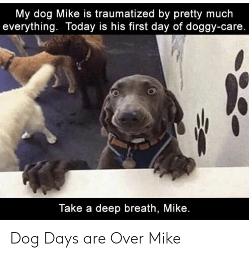 over: Dog Days are Over Mike
