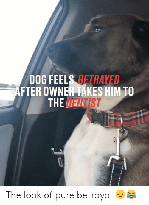 Dank, 🤖, and Dog: DOG FEELS BETRAYED  AFTER OWNER TAKES HIM TO  THE DENTIST The look of pure betrayal 😞😂