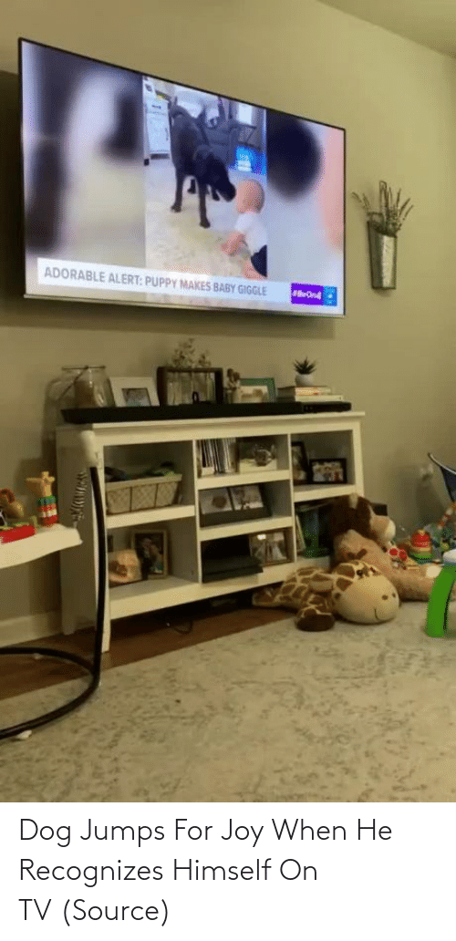 When He: Dog Jumps For Joy When He Recognizes Himself On TV(Source)