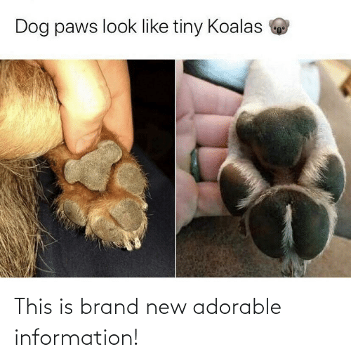 Information: Dog paws look like tiny Koalas This is brand new adorable information!