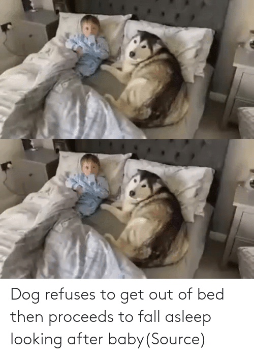 bed: Dog refuses to get out of bed then proceeds to fall asleep looking after baby(Source)