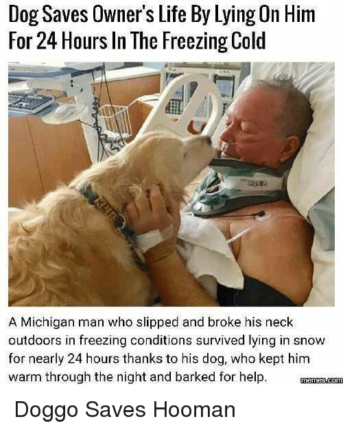 Life, Help, and Michigan: Dog Saves Owner's Life By Lying On Him  For 24 Hours In The Freezing Cold  A Michigan man who slipped and broke his neck  outdoors in freezing conditions survived lying in snow  for nearly 24 hours thanks to his dog, who kept him  warm through the night and barked for help Doggo Saves Hooman