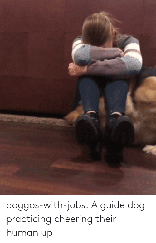 human: doggos-with-jobs: A guide dog practicing cheering their human up