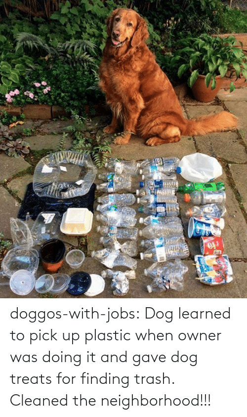 Doing: doggos-with-jobs: Dog learned to pick up plastic when owner was doing it and gave dog treats for finding trash. Cleaned the neighborhood!!!