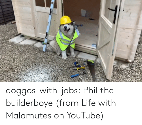 From: doggos-with-jobs:  Phil the builderboye (from Life with Malamutes on YouTube)