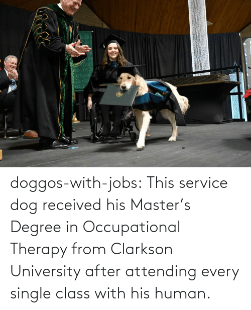 human: doggos-with-jobs:  This service dog received his Master's Degree in Occupational Therapy from Clarkson University after attending every single class with his human.
