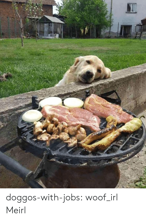 woof: doggos-with-jobs:  woof_irl  Meirl