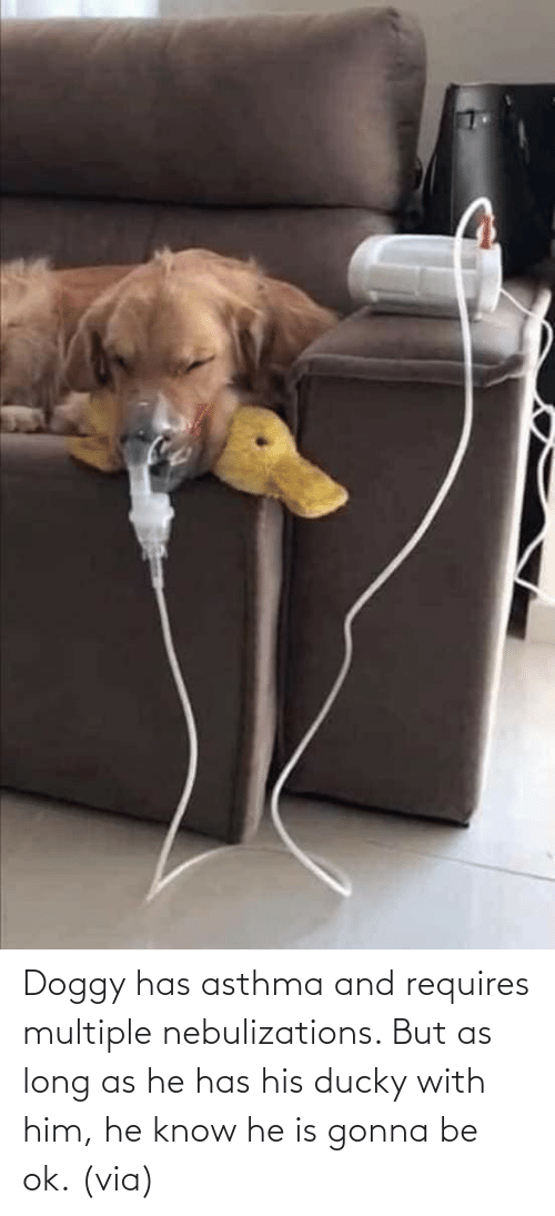 OK: Doggy has asthma and requires multiple nebulizations. But as long as he has his ducky with him, he know he is gonna be ok. (via)