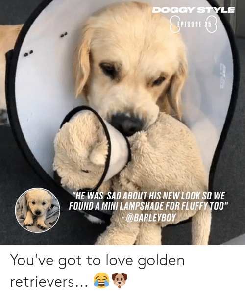 """Dank, Doggy Style, and Love: DOGGY STYLE  EPISODE 35  """"HE WAS SAD ABOUT HIS NEW LOOK SO WE  FOUND A MINI LAMPSHADE FOR FLUFFY TOO""""  @BARLEYBOY You've got to love golden retrievers... 😂🐶"""