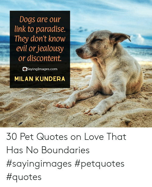 Paradise: Dogs are our  link to paradise.  |They don't know  evil or jealousy  or discontent.  SayingImages.com  MILAN KUNDERA 30 Pet Quotes on Love That Has No Boundaries #sayingimages #petquotes #quotes