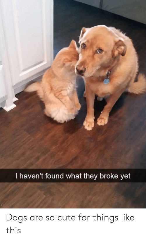 cute: Dogs are so cute for things like this