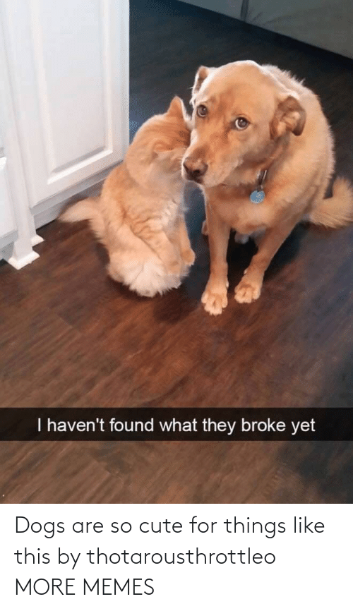 cute: Dogs are so cute for things like this by thotarousthrottleo MORE MEMES